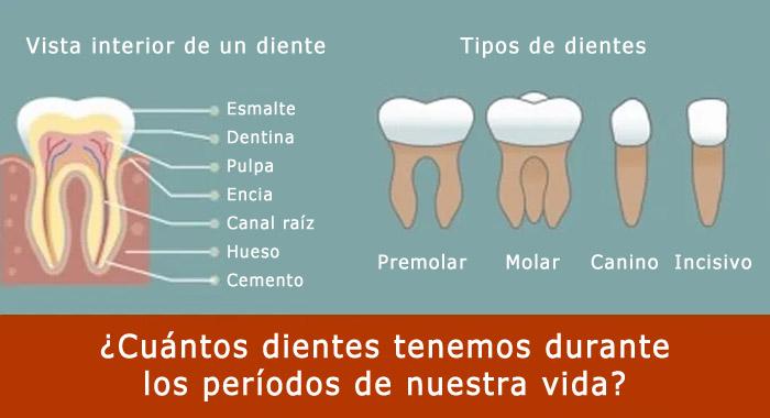 cuantos-dientes