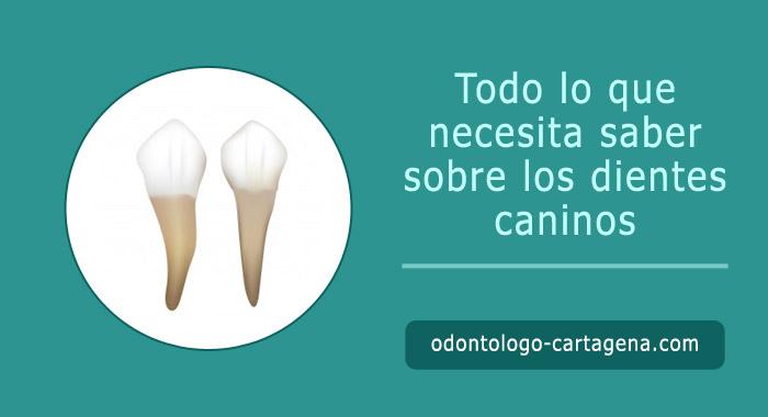 dientes-caninos