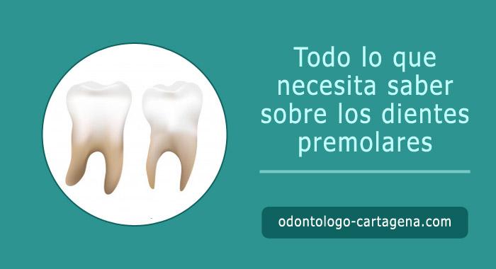 dientes-premolares